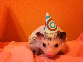 Ain't no party like a hedgehog party