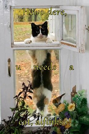 Hewo dere, u     needs     a cat, aifinkso!