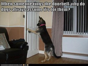 When someone rings the doorbell, why do dogs always assume it's for them?