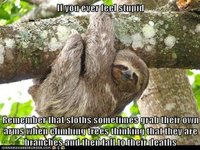 If you ever feel stupid  Remember that sloths sometimes grab their own arms when climbing trees thinking that they are branches and then fall to their deaths