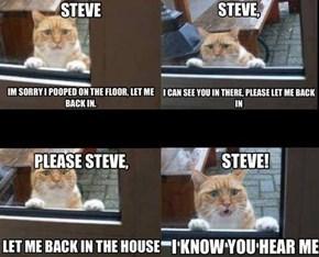 Steve, PLEEEEEEEEEEASE!