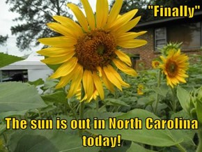 """Finally""  The sun is out in North Carolina today!"