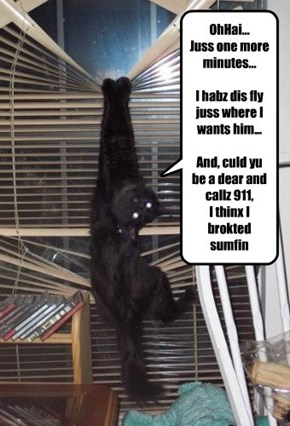 OhHai... Juss one more minutes...  I habz dis fly juss where I wants him...  And, culd yu be a dear and callz 911,  I thinx I brokted sumfin