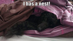 I has a nest!