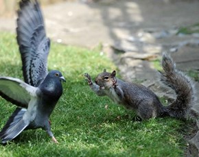Battle For The Bread Crumbs Underway