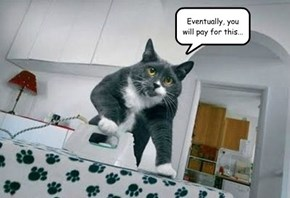 Ironing Cat