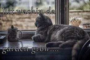 Jist wachin da   garden grow....