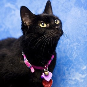 We Promise Black Cats Aren't Actually Bad Luck!
