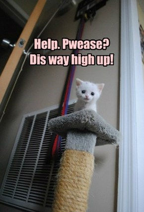 Help. Pwease? Dis way high up!