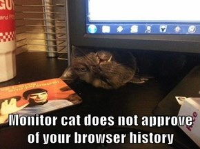 Monitor cat does not approve of your browser history