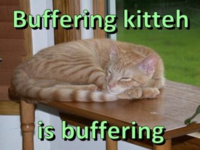 Buffering kitteh  is buffering
