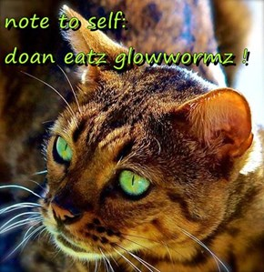 note to self:                  doan eatz glowwormz !