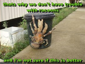 thats why we don't have trouble with racoons