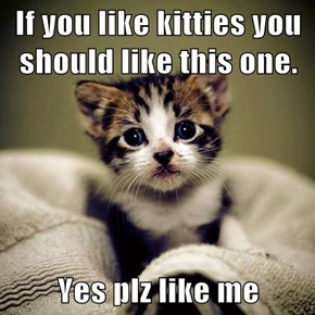 If you like kitties you should like this one.  Yes plz like me