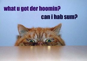 what u got der hoomin?
