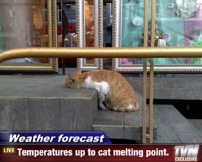 Weather forecast - Temperatures up to cat melting point.
