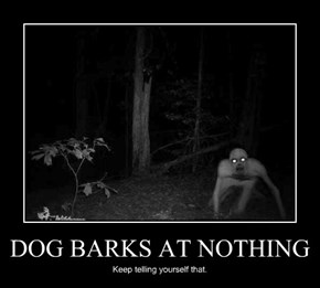 DOG BARKS AT NOTHING
