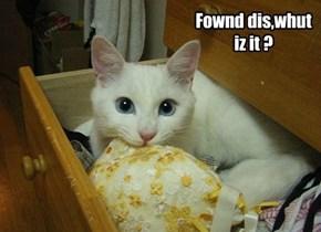 Fownd dis,whut iz it ?