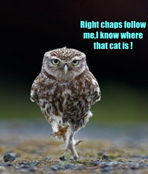 Right chaps follow me,I know where that cat is !