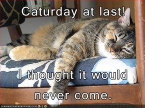 Caturday at last!  I thought it would never come.
