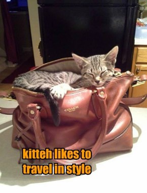 kitteh likes to travel in style