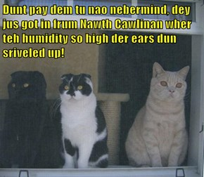 Dunt pay dem tu nao nebermind, dey jus got in frum Nawth Cawlinan wher teh humidity so high der ears dun sriveled up!