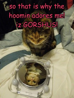 so that is why the hoomin adores me!  iz GORSHUS!