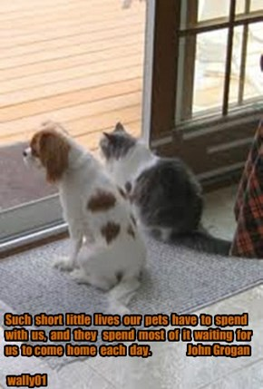 Such  short  little  lives  our  pets  have  to  spend  with  us,  and  they   spend  most  of  it  waiting  for  us  to come  home  each  day.                 John Grogan   wally01