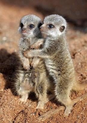 Cuddle munckins