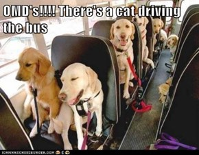 OMD's!!!! There's a cat driving the bus