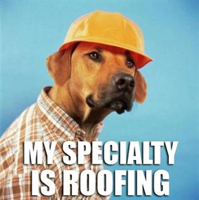 Rover, Roofing Specialist