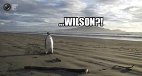 ...WILSON?!