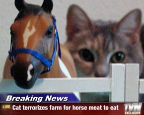 Breaking News - Cat terrorizes farm for horse meat to eat
