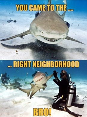 Who Wouldn't Love an Awesome Shark?