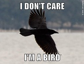 I DON'T CARE  I'M A BIRD