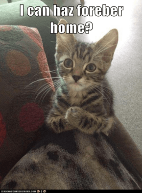 I can haz foreber home?