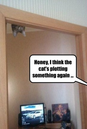 Honey, I think the cat's plotting something again ...
