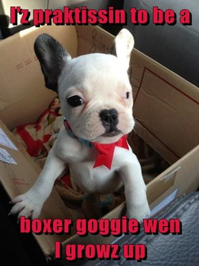 I'z praktissin to be a   boxer goggie wen       I growz up