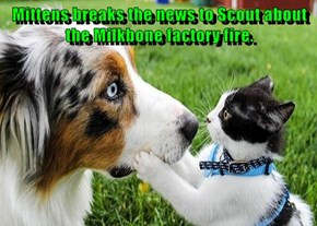 Mittens breaks the news to Scout about the Milkbone factory fire.