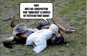 "YUP! JUST AS I SUSPECTED!  YOU ""QUACKED"" A COUPLE OF TEETH ON THAT BONE!"