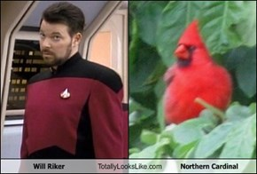 Will Riker Totally Looks Like Northern Cardinal