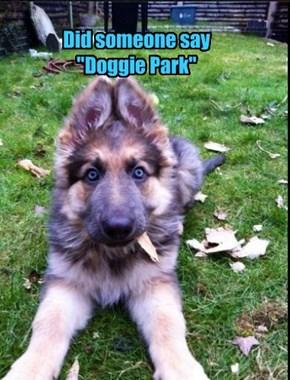 "Did someone say  ""Doggie Park"""