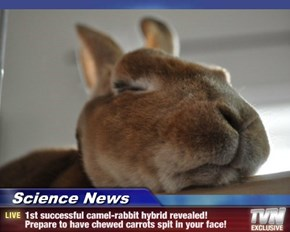 Science News - 1st successful camel-rabbit hybrid revealed!  Prepare to have chewed carrots spit in your face!
