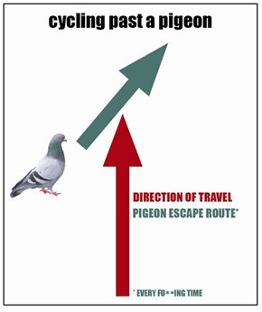 Pigeon Flight Patterns