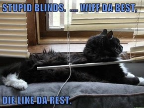 STUPID BLINDS.  .... WIFF DA BEST,  DIE LIKE DA REST.
