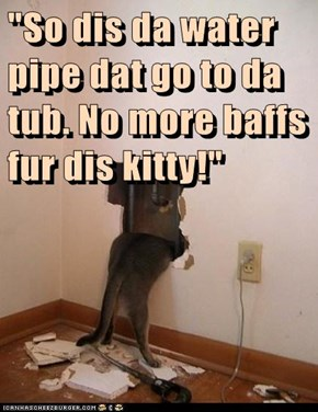 """So dis da water pipe dat go to da tub. No more baffs fur dis kitty!"""