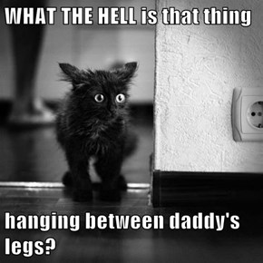 WHAT THE HELL is that thing   hanging between daddy's legs?