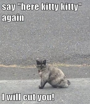 "say ""here kitty kitty"" again  I will cut you!"