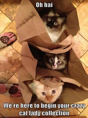 Oh hai  We're here to begin your crazy cat lady collection