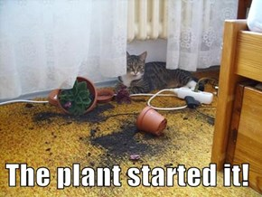 The plant started it!